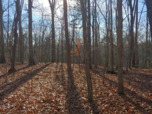 Wooded property with fallen leaves covering the ground and rays of sunlight beaming through the bare trees.