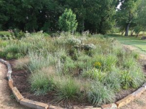A native meadow planting bed composed of grasses and forbs with trees in the background.