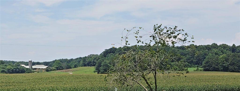 Farm View from porch at Maple View Farm, Hillsborough